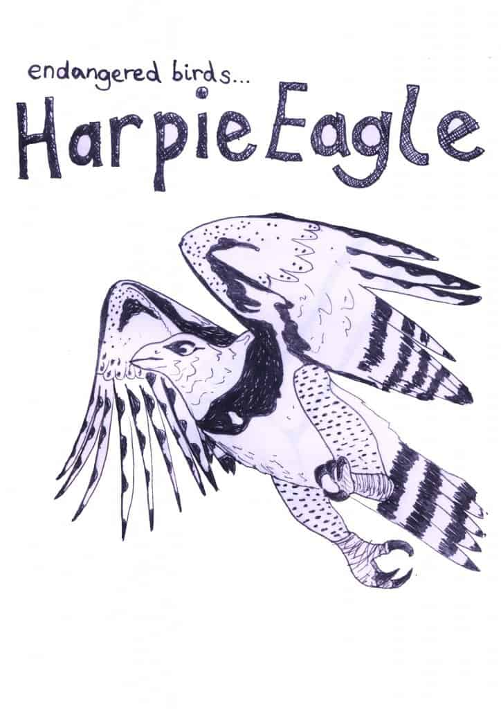 esther tew harpie eagle